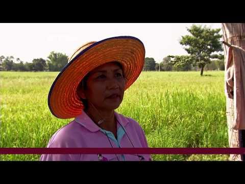Thailand Grants Farmers Rice Subsidies.mov
