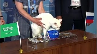 Psychic cat picks winner of World Cup opener