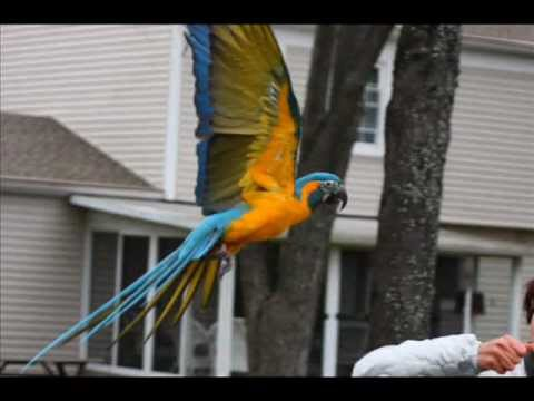 Parrot Freeflight -- the Real Issues and Training Involved in Flying Outdoors