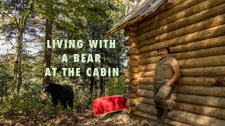 Living with a Blackbear at the off grid Cabin in the Forest and Installing Windows