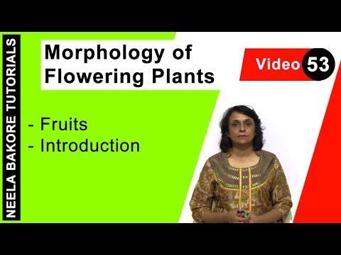 Morphology of Flowering Plants - Fruits - Introduction