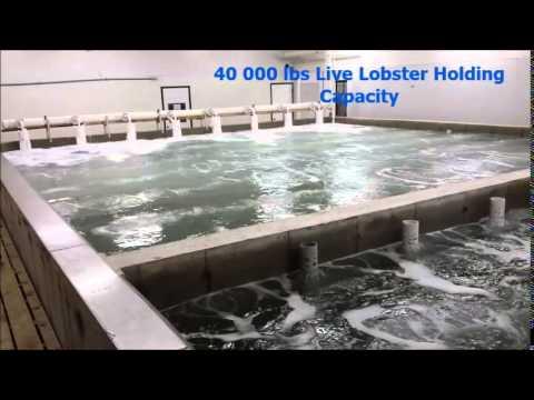 40 000lbs Lobster Purge Tank