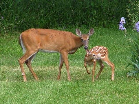 Deer Repellent Review To Protect Your Winter Garden