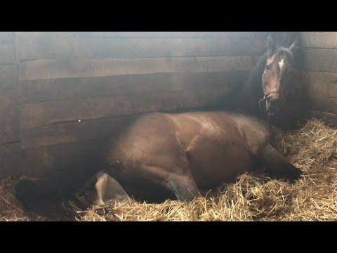 Xxx Mp4 Horse Giving Birth GRAPHIC Full Length 3gp Sex