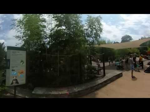 DC 360: Pandas at the Smithsonian's National Zoo