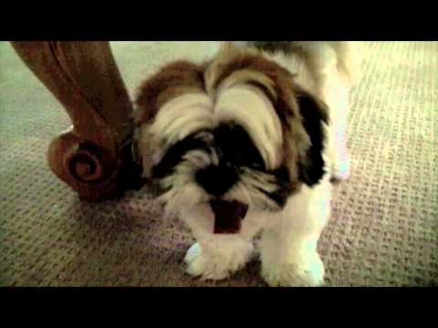 Dog Wars: Stop Chewing On Me!