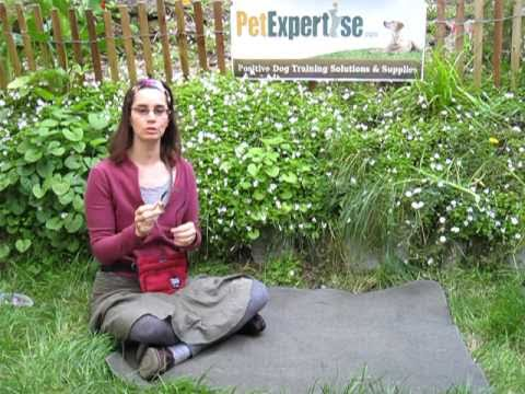 Housebreaking Bell for Dogs Pet Expertise Demonstration