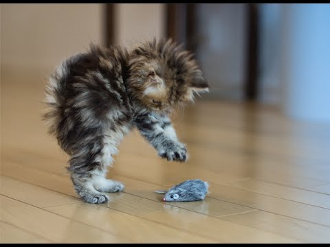 Best Cat Toys~ Best Cat Toys For Active Cats