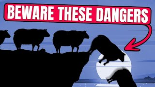 The Psychology of Herd Mentality