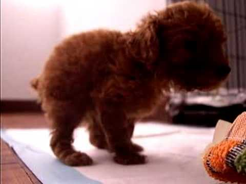 puppy boy constipation