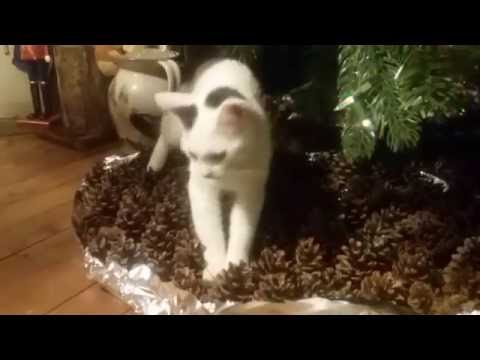 Keeping your cat out from under your Christmas tree.