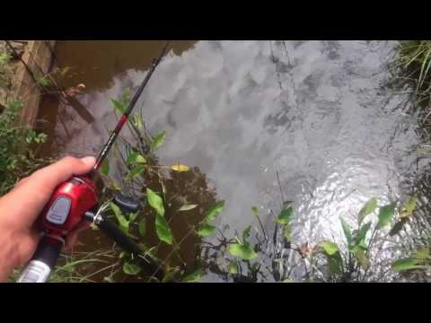 Catching crawfish in a small creek