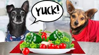 Dog Reviews Food With Best Friend | PawZam Dogs Taste Test for 24 Hours with Secret Crush!