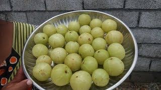 Simple Cooking / Fresh Amla Rice Recipe in My Home / Healthy Food