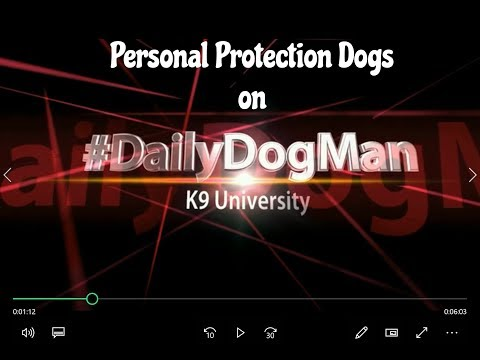 How to choose a dog for Personal Protection