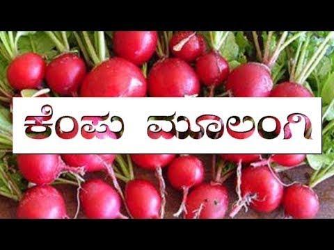 Health Benefits From Red Radish | ಕೆಂಪು ಮೂಲಂಗಿಯ ಸೇವನೆಯಿಂದ ಆರೋಗ್ಯಕ್ಕೆ ಲಾಭ..!