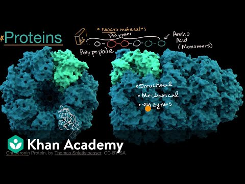 Introduction to proteins and amino acids