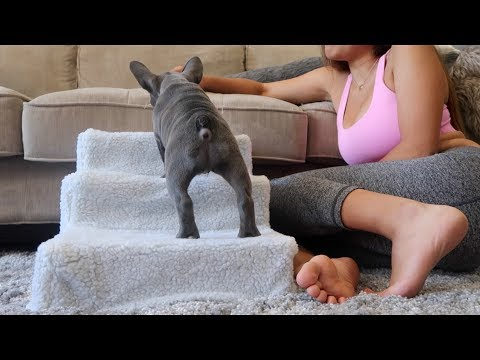 PUPPY LEARNS HOW TO USE THE STAIRS!!!!