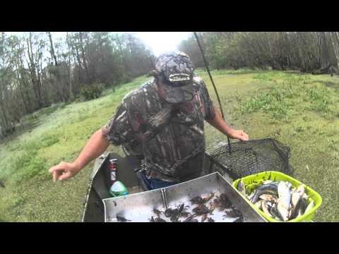 Crawfishing in Pierre part Louisiana 2016