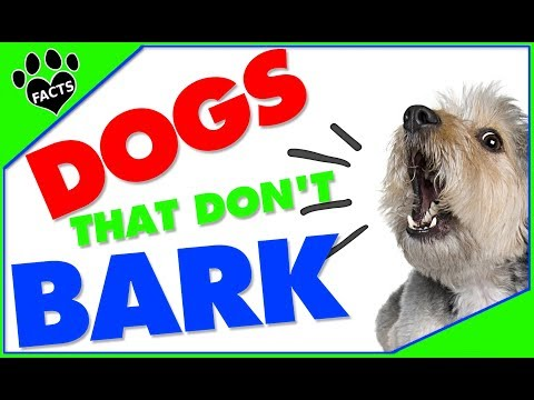 TopTenz: Top 10 Most Quiet Dog Breeds Dogs 101 - Animal Facts