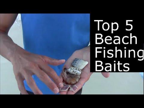 Top 5 Best Beach Fishing Baits --Shrimp, Squid, cut bait, Sand flea, fiddler crab