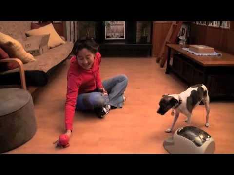 Teaching a Dog to Play Fetch | drsophiayin.com