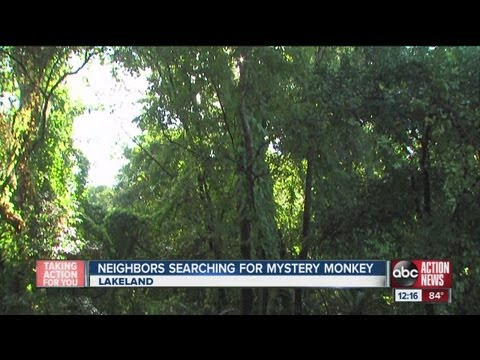 FWC searching for monkey they believe might be on the loose in north Lakeland