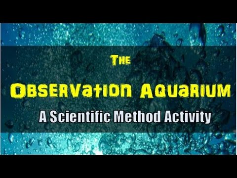 How To Make An Observation Aquarium