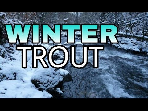 How to Fish for Winter Trout & Steelhead feat. NICE BROOK TROUT