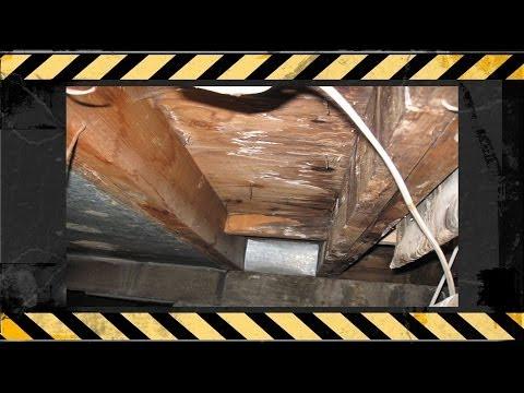 Denver Real Estate Agent Mold Remediation Testimonial for Disaster Restoration Experts