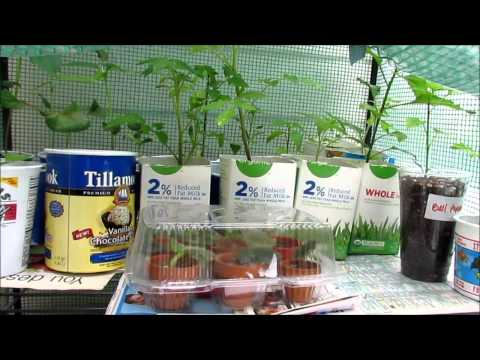 Thrifty Gardener Reuse Food Containers for Plants  Make A Grow Box