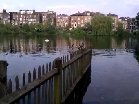 Patos en hampstead heath park