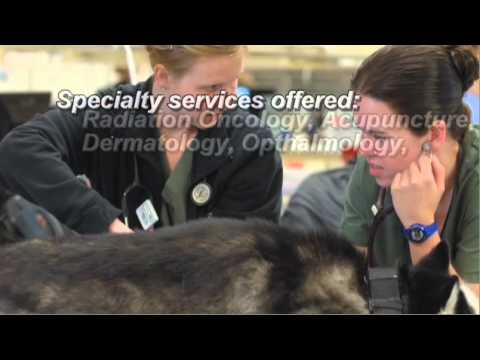 This is Veterinary Specialty & Emergency Center 2