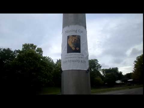Missing Cat Poster - FAIL