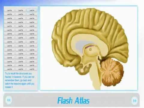 Learn a complete neuroanatomy in just 2 WEEKS  With NeuroAnatomy 3d Software & Flash Brain Anatomy