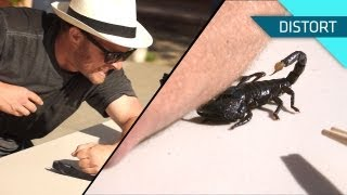Download Getting Stung by a Scorpion. In Slow Motion! Video