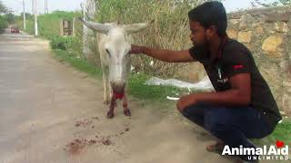 Saddest donkey's mouth full of blood after eating glass saved