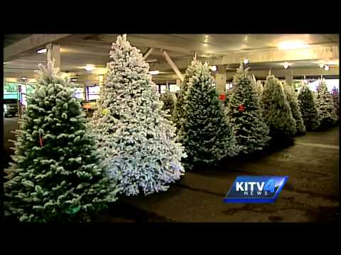 Man's passion to flock Christmas trees
