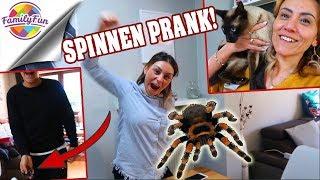 Download MEGA SPINNEN PRANK RACHE😣 -schreckliche Katzen Phobie - Family Fun Video