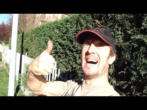 How to Cut a Hedge Neatly up to a Railing! [Live Stream Test Video]