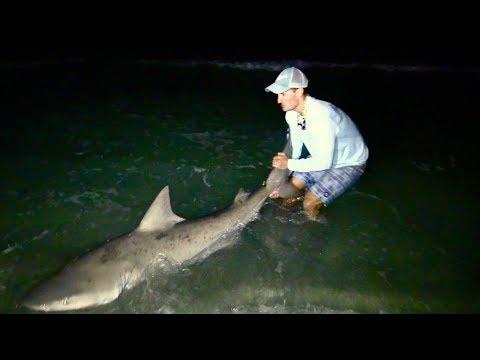 BIG Bull Sharks Beach Fishing!!!