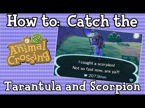 How to: Catch the Tarantula and Scorpion (Remaster)