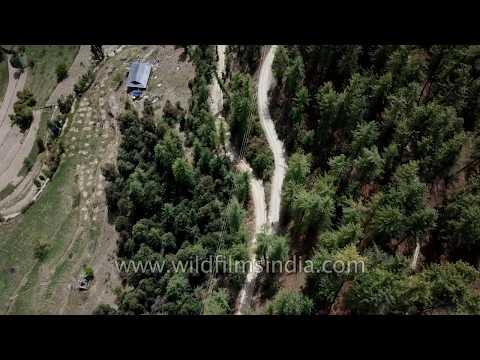 Shimla - biking on mountains roads, in deodar forests