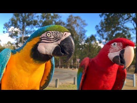 Pet Bird Day Gathering 2_6