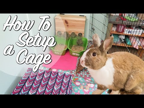 How To Set Up A Rabbit Cage!