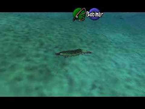 HYLIAN LOACH - The Legend of Zelda: Ocarina of Time