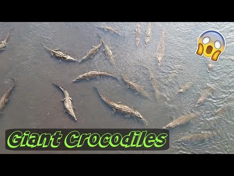 WE FOUND GIANT CROCODILES IN COSTA RICA!!!
