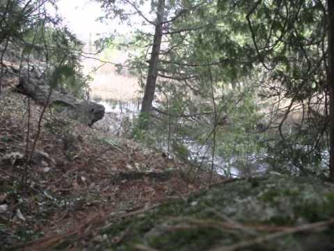 Getting rid of a beaver dam