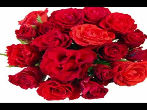 Pictures of Roses |Pictures Of Flowers