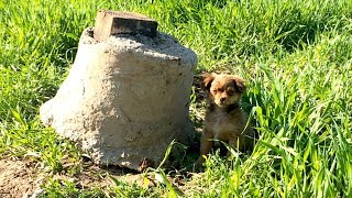 Download We went to rescue one puppy... Video